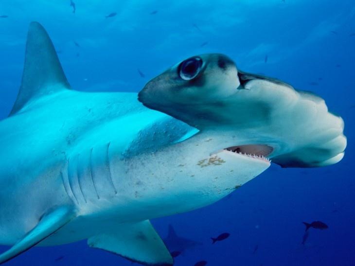 Aménagement bateau Requin10