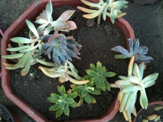 Des plantes grasses à identifier mes amis! Img_0415
