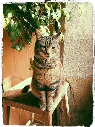 *** spécial *** photos de nos animaux *** - Page 6 1_pizz10