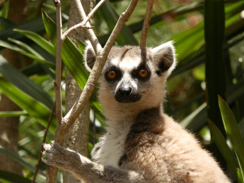Madagascar Pa040010
