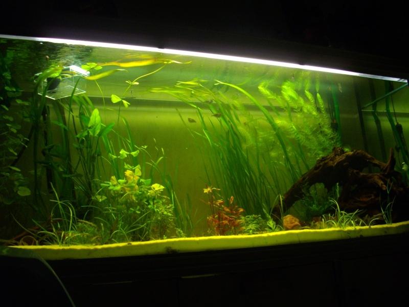 Mon rena aqualife 450 litres 06010