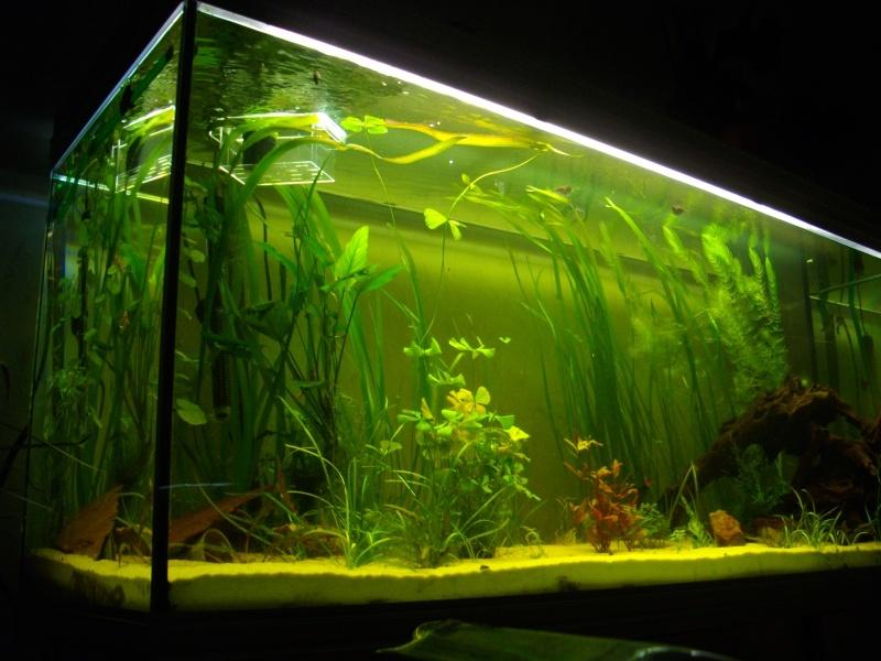 Mon rena aqualife 450 litres 06310