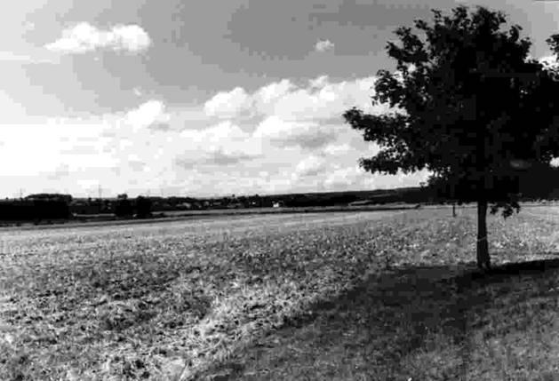 Les Rheinwiesen,le derniere tabou Image021