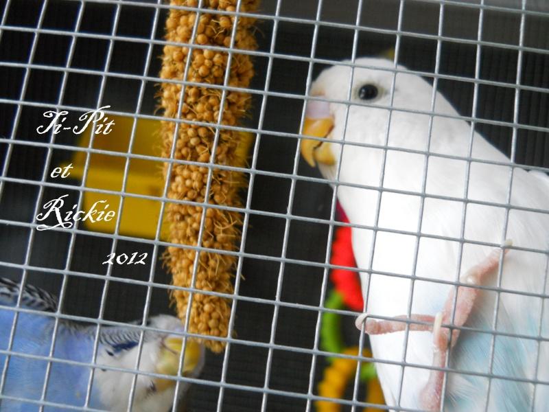 Diaporama vidéo du forum, postez ici vos meilleures photos - Page 5 311