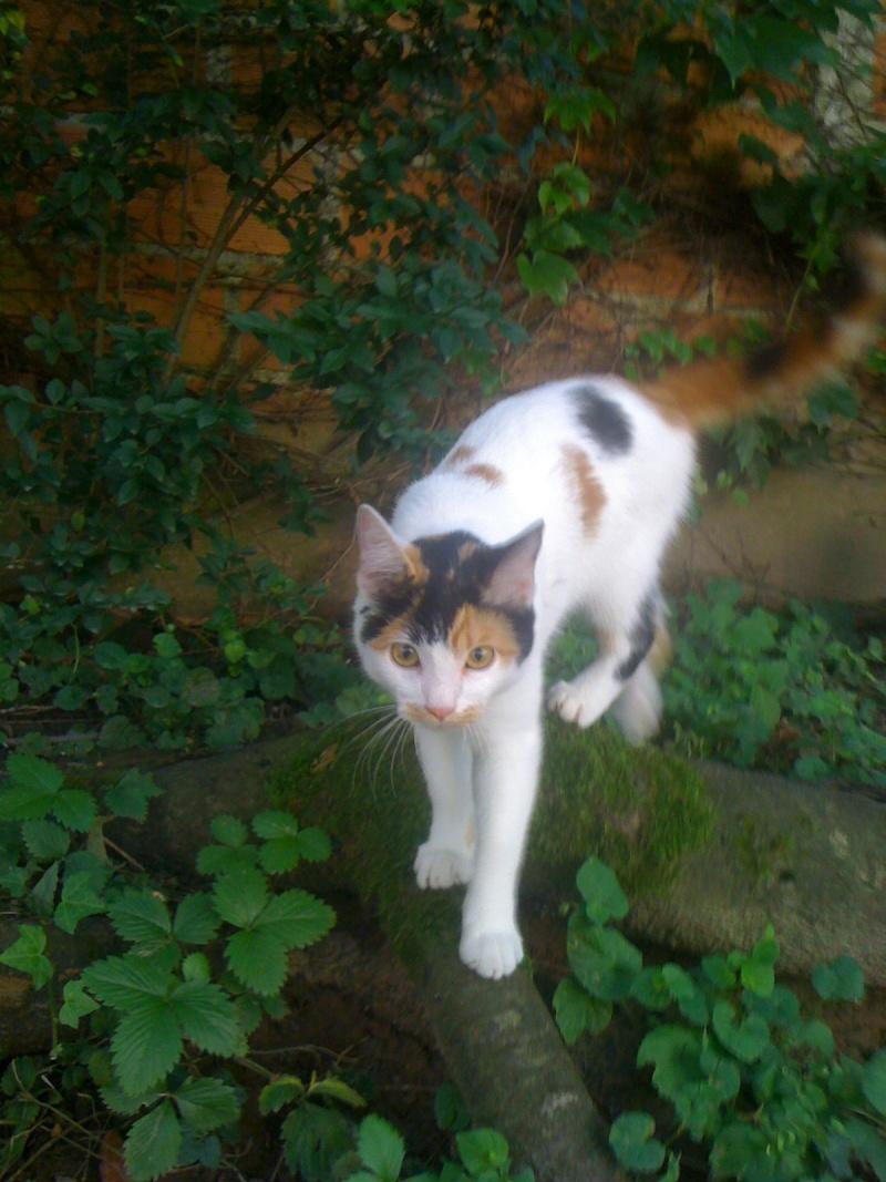 Adresse d'association pour chat Photo11