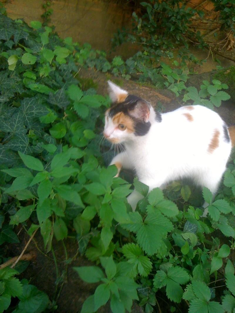 Adresse d'association pour chat Photo213