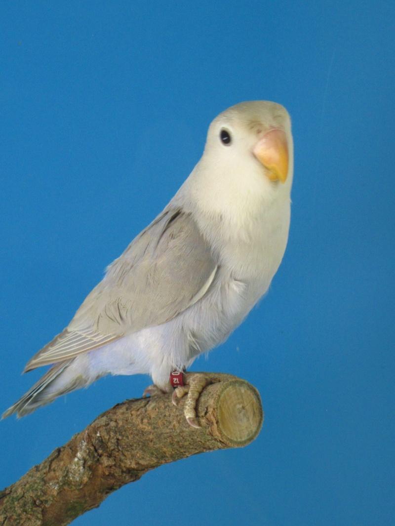 plumage bizarre Img_3610