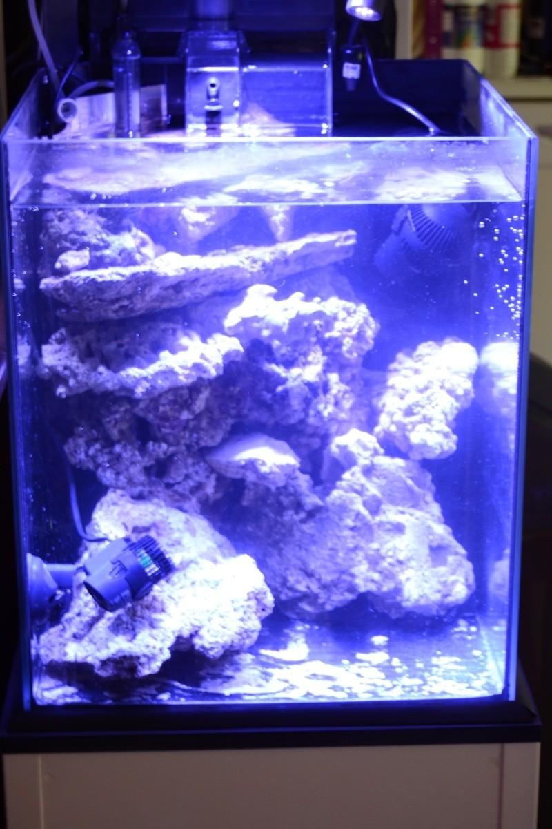 un petit recifal au milieu de plein d'eau douce ^^ Dsc_0225