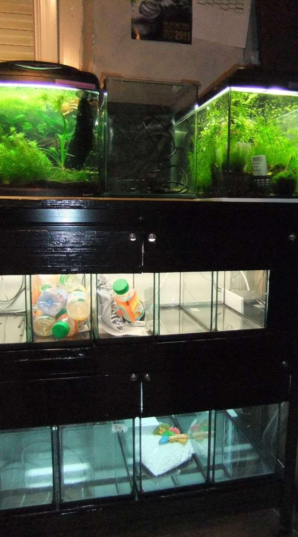 Ma mini-Fishroom Dscf3518