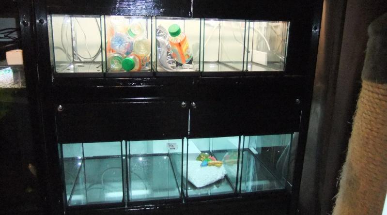 Ma mini-Fishroom Dscf3519