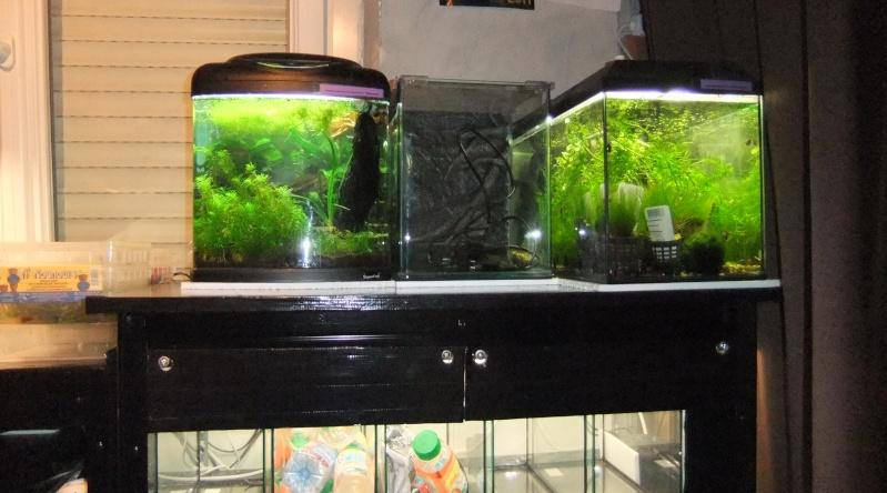 Ma mini-Fishroom Dscf3520