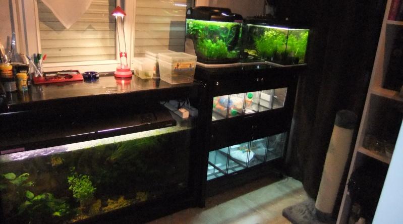 Ma mini-Fishroom Dscf3521