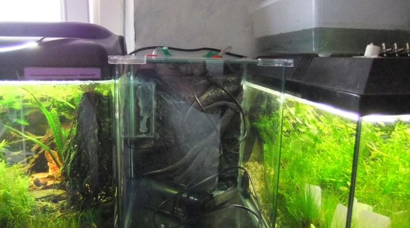 Ma mini-Fishroom Dscf3529