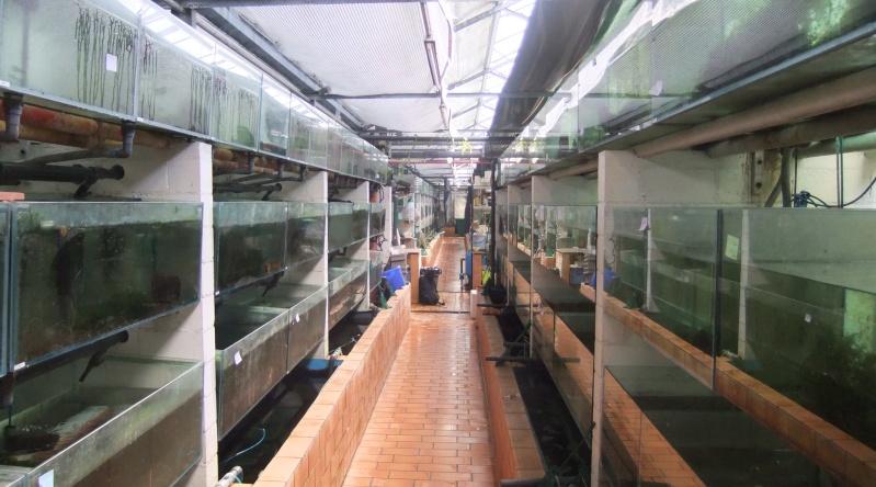 Sortie aquafarm-paradise le 1/10/11 à 14H - Page 4 Dscf4526