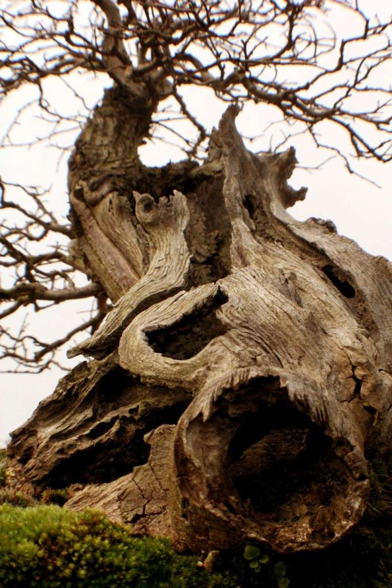 Hollow trunk Img_5611