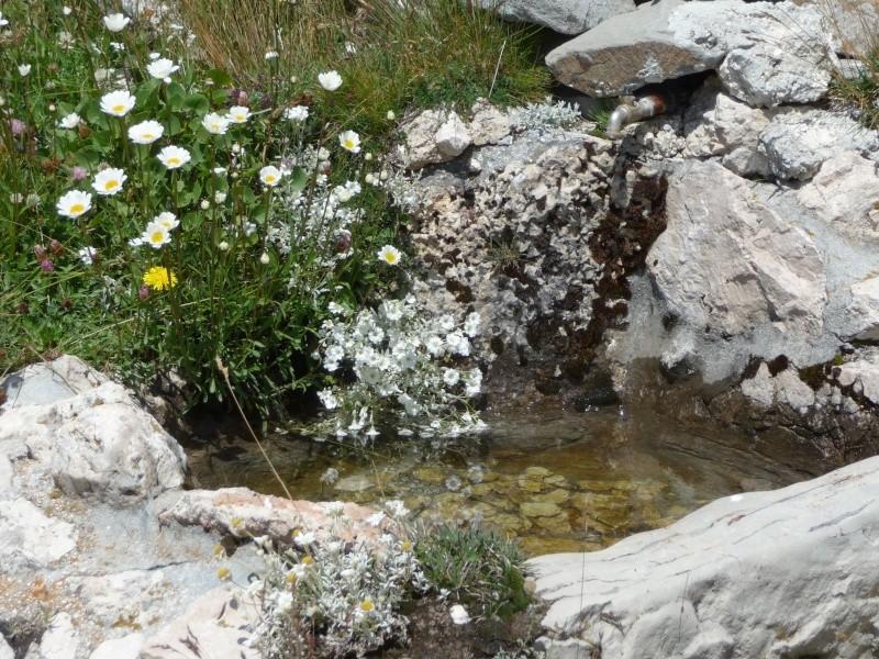 3^ Arrosticinata sul Gran Sasso il 30/07/2011 - Pagina 2 P1010112