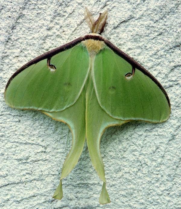 vert comme la nature ou l'espoir - Page 11 Saturn10