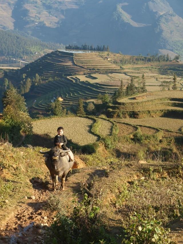 Nord Vietnam: Hmongs et Hanoi... Quelques autres P1157211