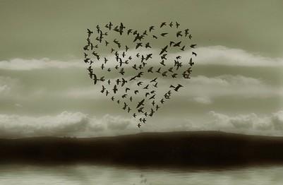 Un coeur d'oiseaux (reflet de février) Saint-10