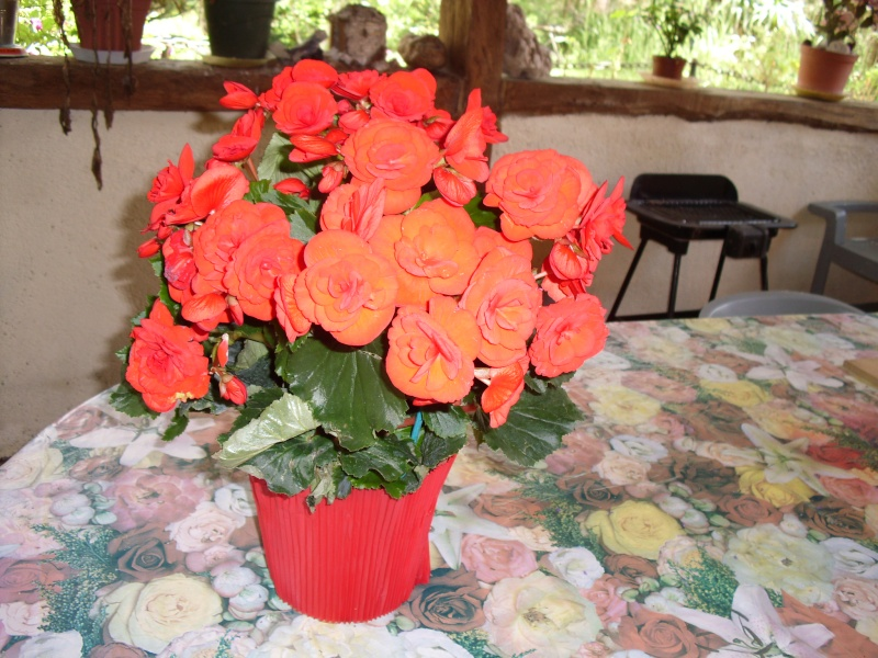 lundi 4 Juin 2012 Fleurs10