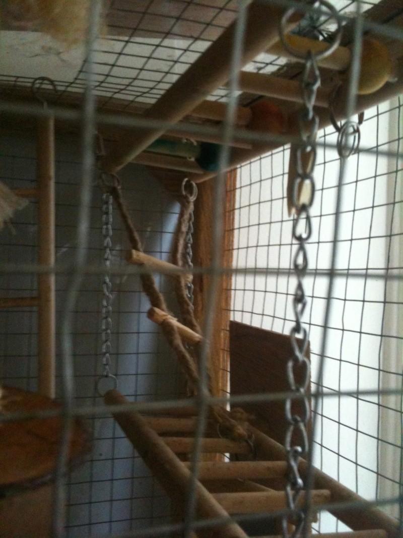 La cage de kiwi qu'en pensez-vous ? Passer10