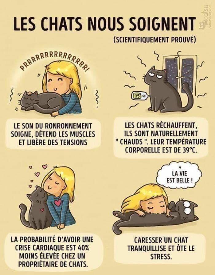 SCIENTIFIQUEMENT PROUVÉ : Les chats nous soignent ! 65482610