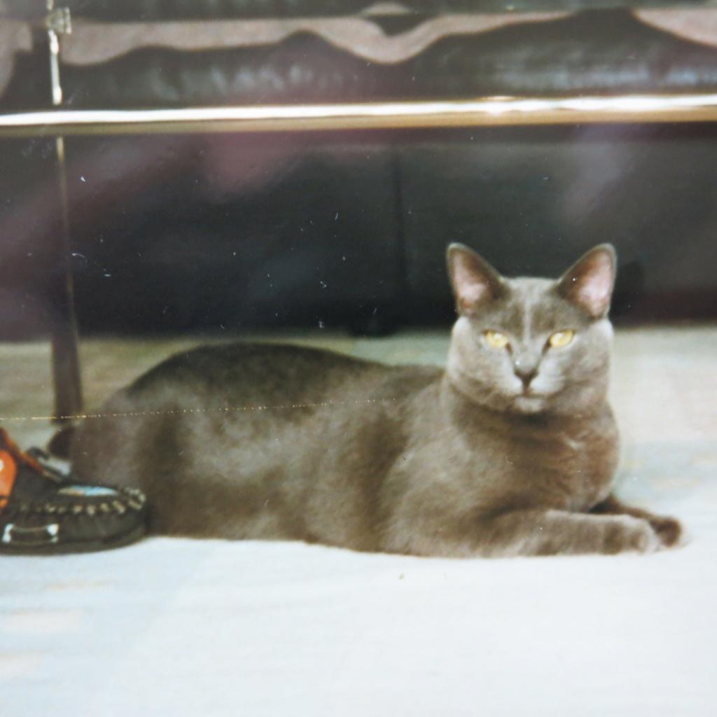 SCIENTIFIQUEMENT PROUVÉ : Les chats nous soignent ! Img_0910