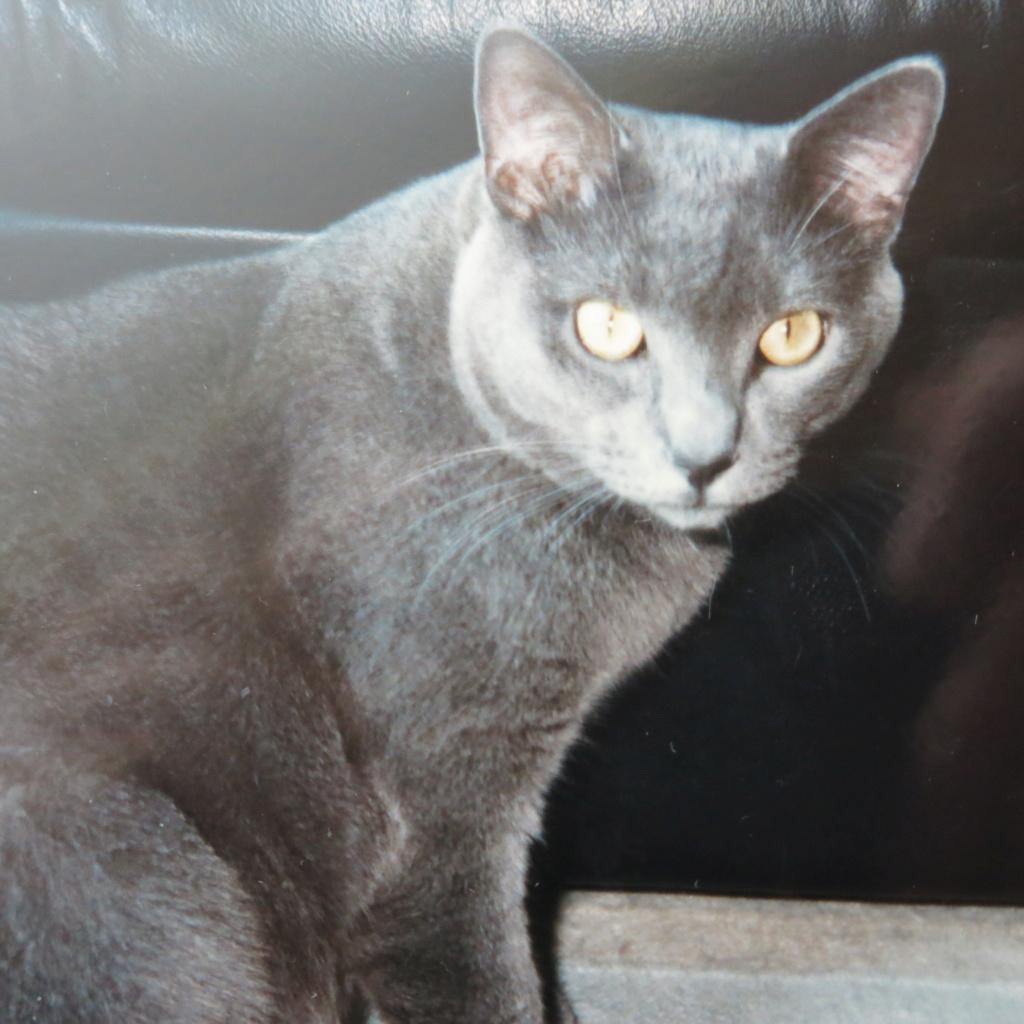 SCIENTIFIQUEMENT PROUVÉ : Les chats nous soignent ! Img_0911