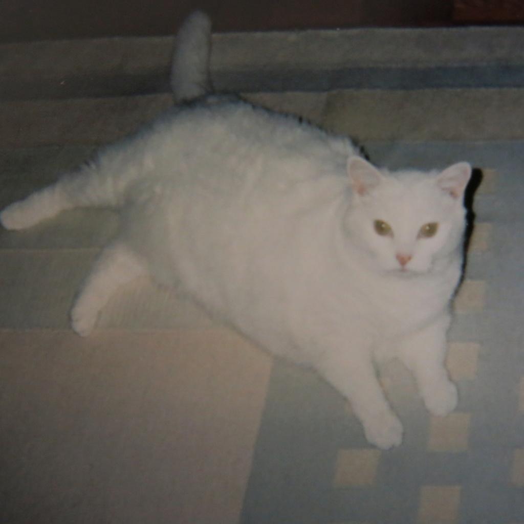 SCIENTIFIQUEMENT PROUVÉ : Les chats nous soignent ! - Page 2 Img_1211