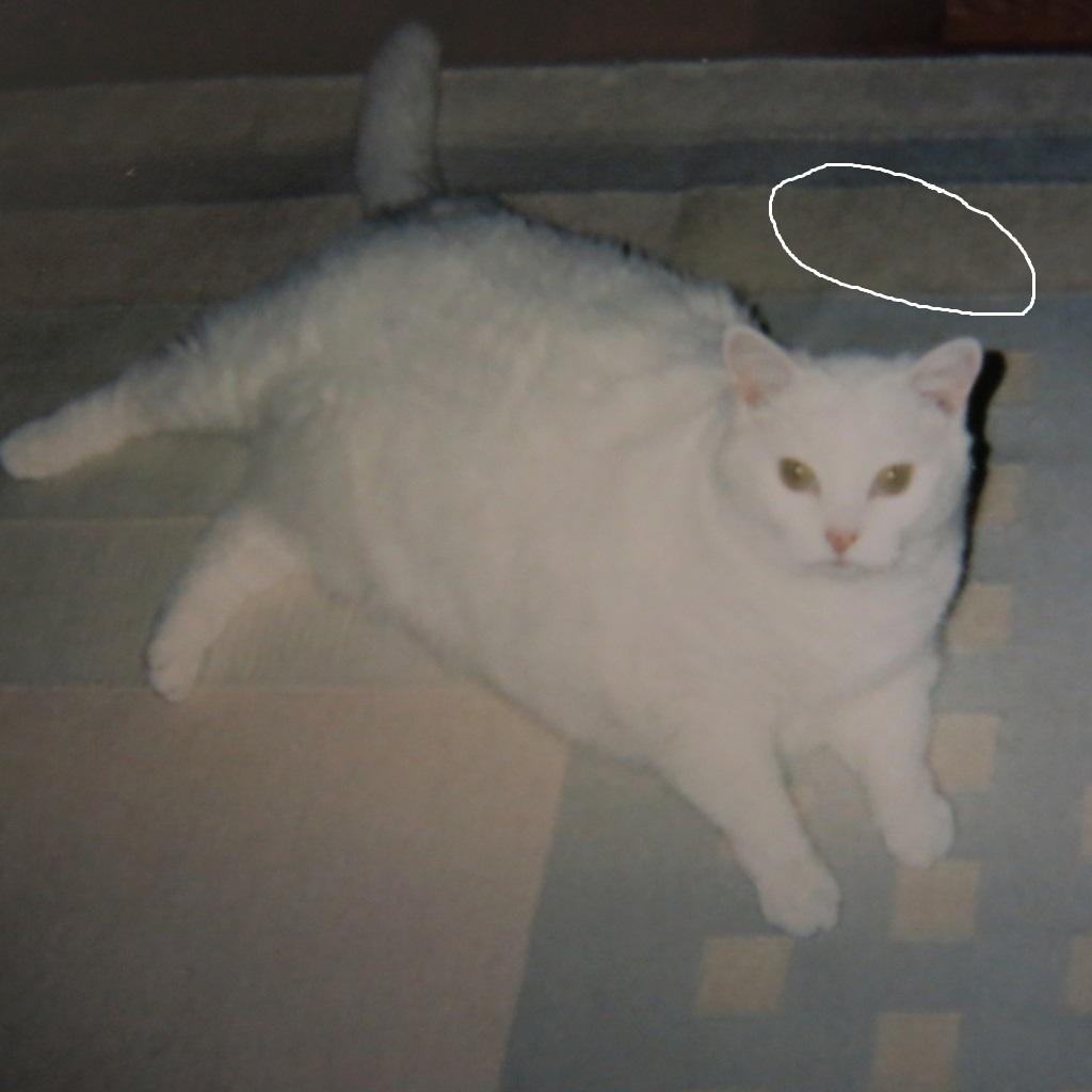 """ALLERGIES : """"Je ne veux pas me départir de mon chat. Aidez-moi"""", - Mica ! Img_1215"""