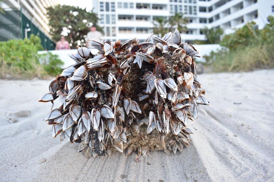 Une mystérieuse Croix de bois sur une plage de Floride  Web-cr11