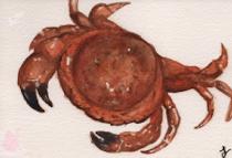 Dessins de Miayo Crabe10