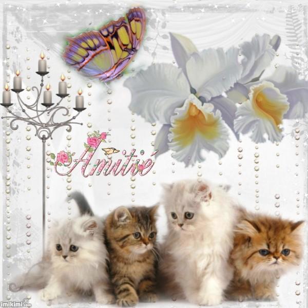 Bonne Mercredi 96778c11