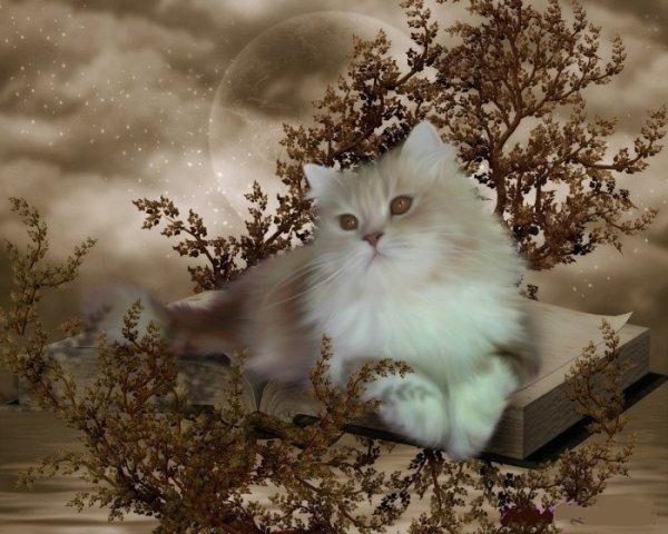 Les chats - Page 4 A77c5110