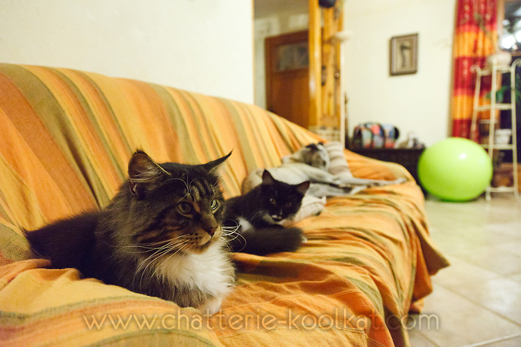 Les chats Chat-c10