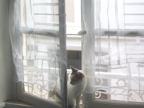 Les chats Chatte10