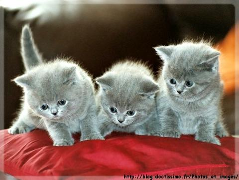 Les chats D515d110
