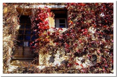Des fenêtres d'hier et d'aujourd'hui. - Page 6 Dsc04910