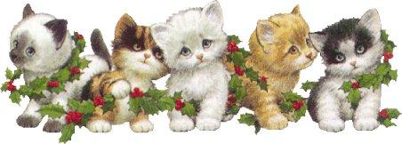 Les chats - Page 5 Fetch310