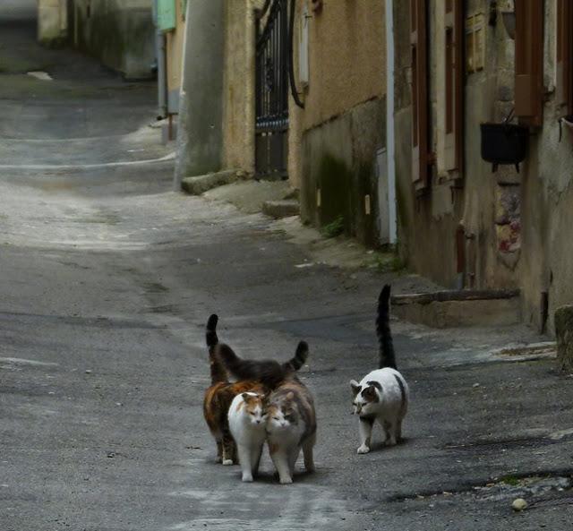 Les chats - Page 6 Les-ch10