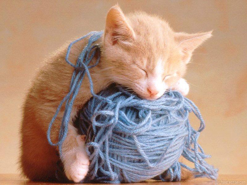 Les chats - Page 3 N984je11