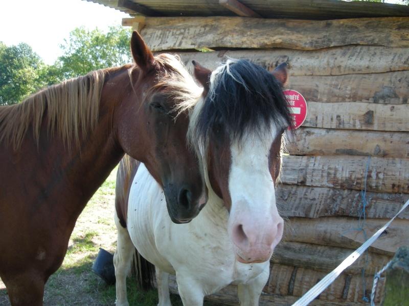 """Paco.... mon """"rouquin"""" à moi.....photos du 11/09/11 - Page 3 Paco_e13"""