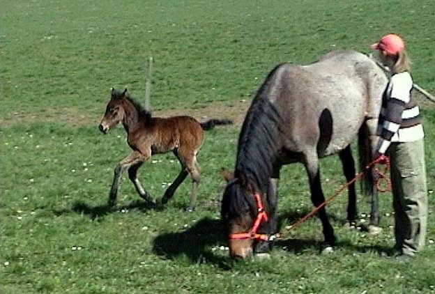 "Concours : ""cheval au galop"" GAGNANTE : TItâne Lolabr11"