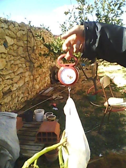 [agri.] Cultiver des patates sur son balcon D0226_17