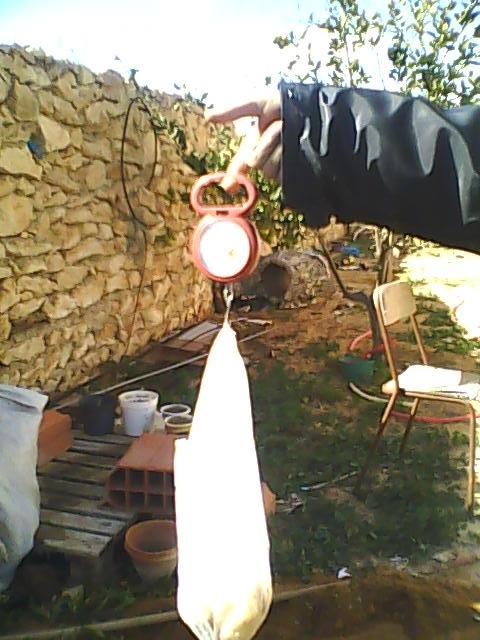 [agri.] Cultiver des patates sur son balcon D0226_19