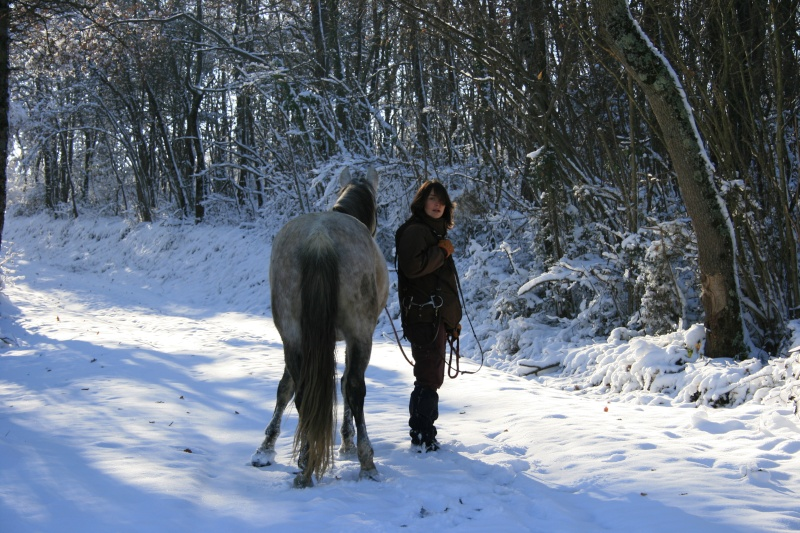 Nouveau concours photos ! La neige, vous, vos chevaux ! - Page 2 Img_3611