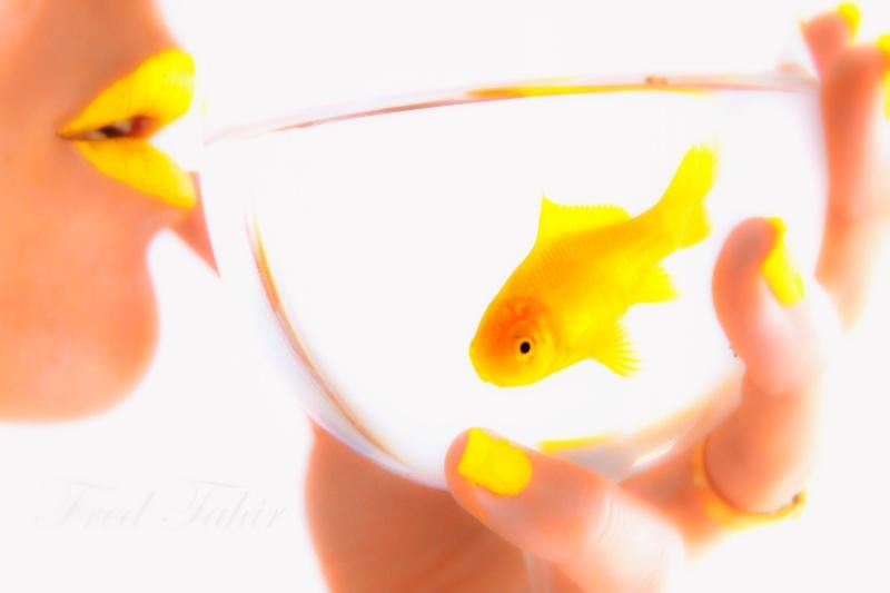 le poisson Poisso10
