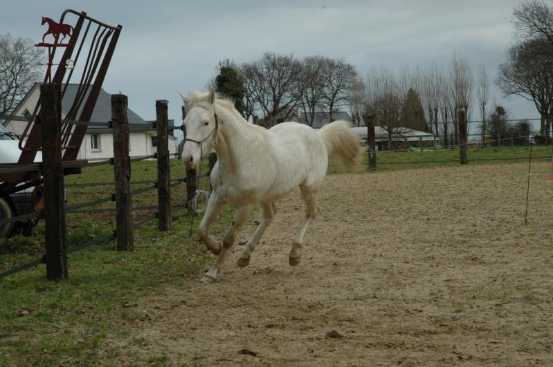 Poulain fewspot origine reining - Page 2 Photos13