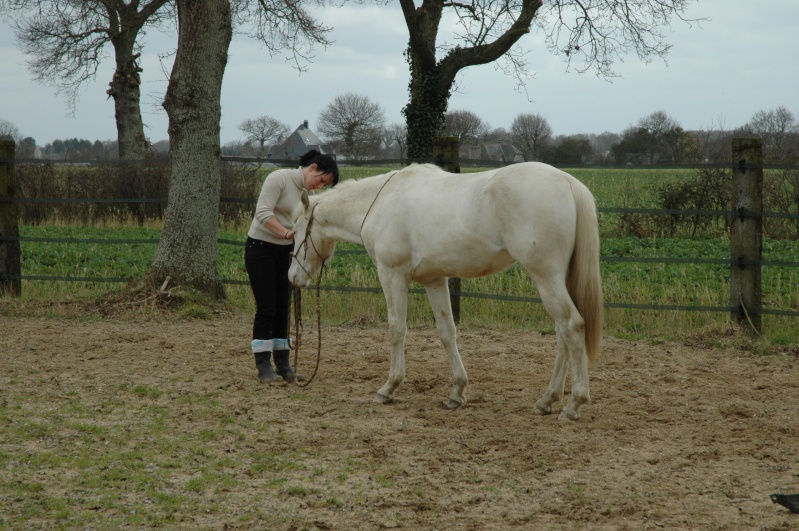 Poulain fewspot origine reining - Page 2 Photos15