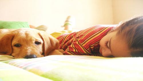 Dormir avec des animaux domestiques, risques pour la santé Cane-b10